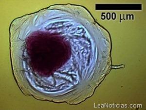 iCHELL (Inorganic Chemical Cells)